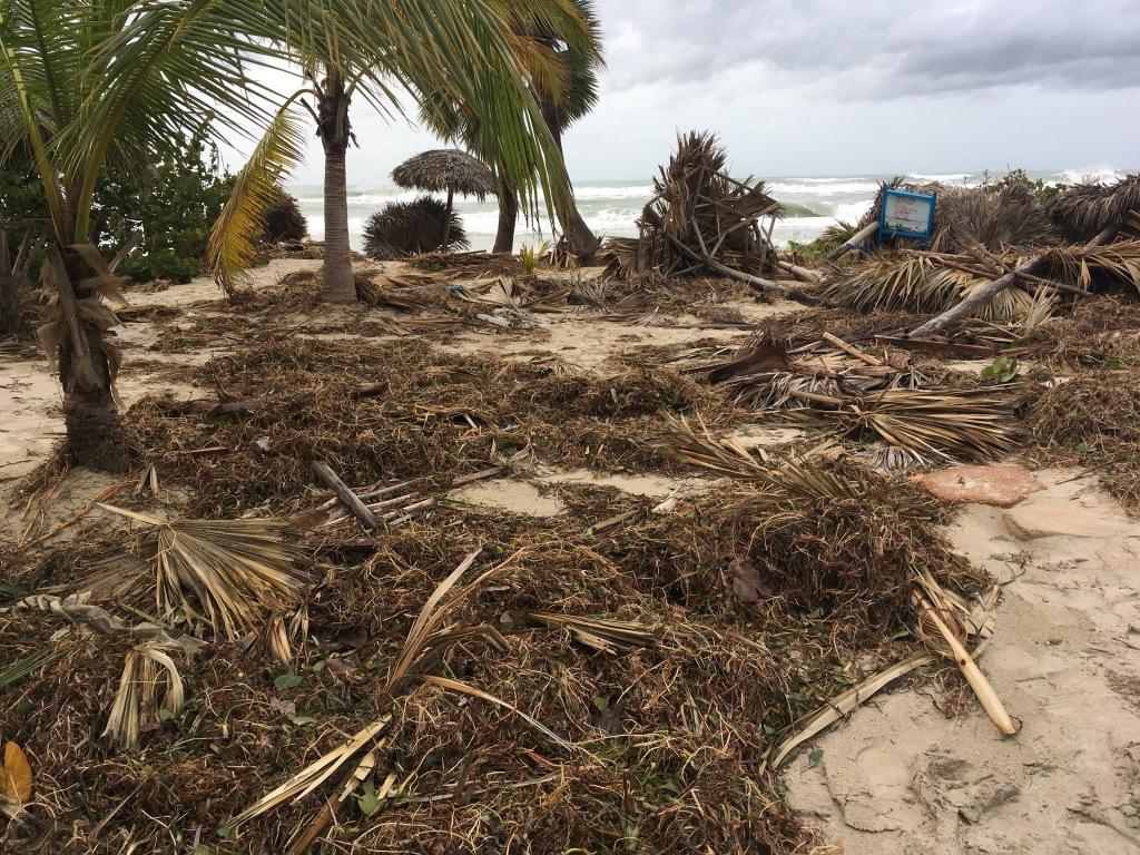 Foto de los restos de las palmeras en Varadero, Cuba, luego del paso del huracán Irma.